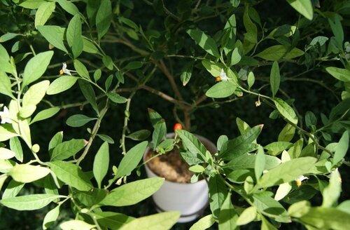 Редкие виды растений (02.04.2013)
