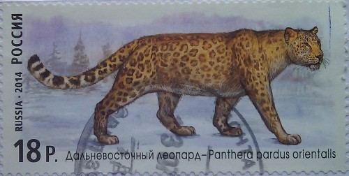 2014 далневост леопард 18.00