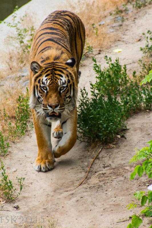 kyiv_zoo-41.jpg