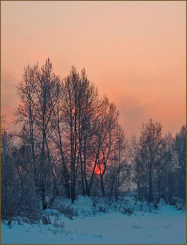Солнце в деревьях