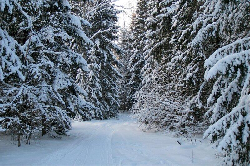 Зимний подмосковный лес