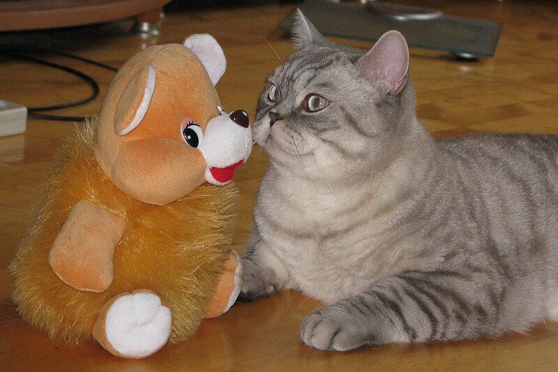 С рыжим другом
