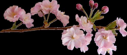 Znalezione obrazy dla zapytania obrazy wiosna PNG