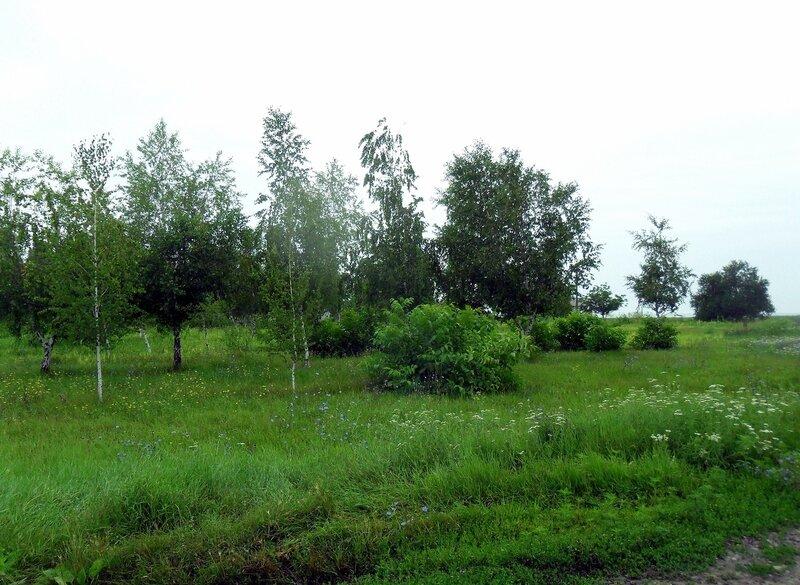 Дождливая погода, пасмурно, июль 2012, Азовское побережье