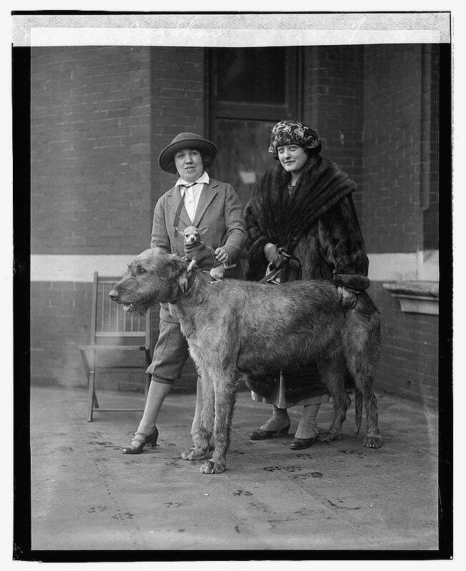 Dog show 1923