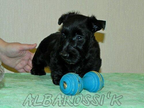 http://img-fotki.yandex.ru/get/4132/10248733.20/0_c4a7a_a2a43439_L.jpg