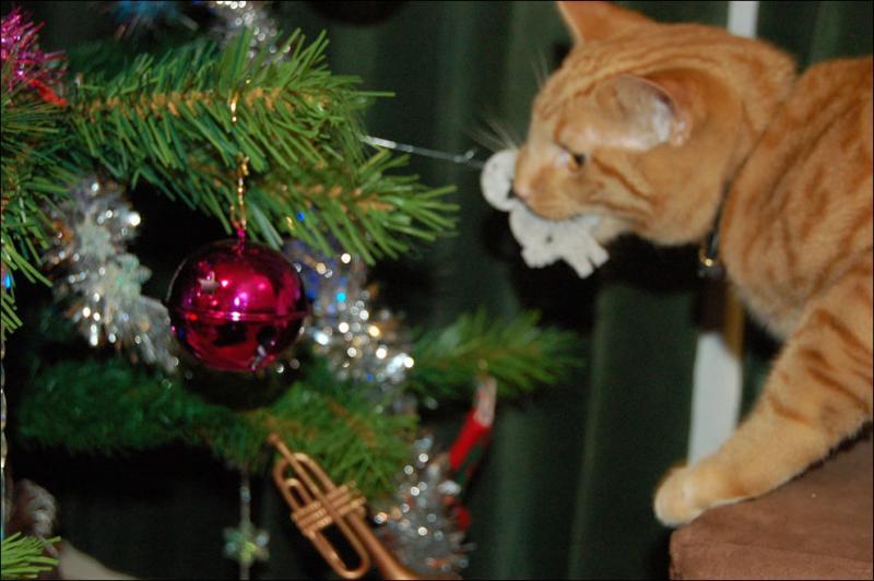 Коты на ёлке - фото 41