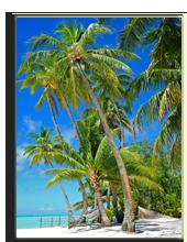 Французская Полинезия. Palm trees at Bora Bora. Фото wilar - shutterstock