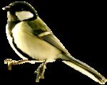 feli_gs_bird2.png