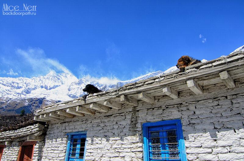 мохнатые жители Кобанга, собаки, горы, снежники, гималаи