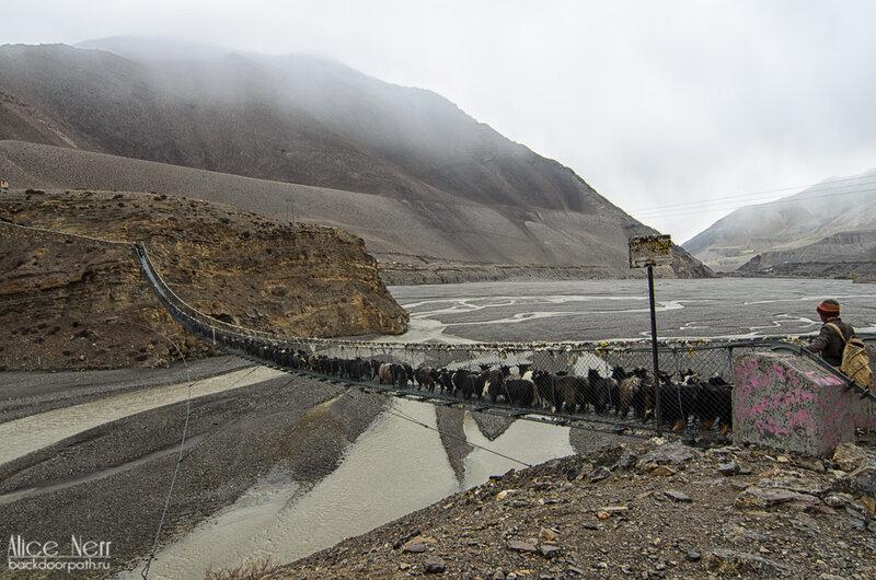 козы и овцы переходят подвесной мост недалеко от Джомсома, Гималаи, Непал