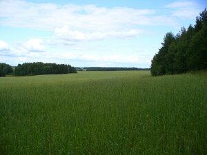 О жизни: Поля, леса, грибы (МНОГО фото) :)