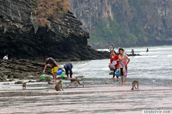 тайцы и обезьяны на тропе обезьян