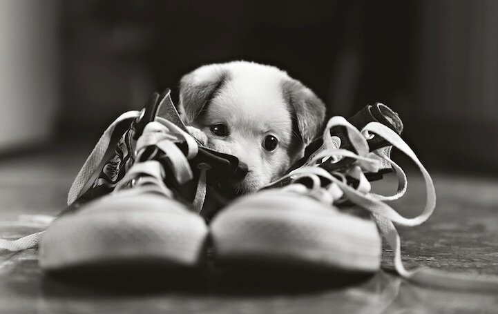 Самая милая собачка