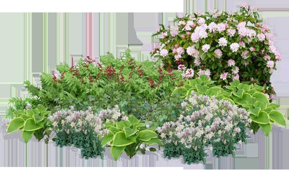 Tube massif de fleurs - Massif de fleurs photos ...
