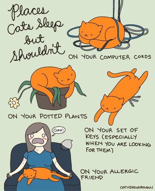 Смешные комиксы про котов на английском языке 0 c6d8e 4ea01750 orig