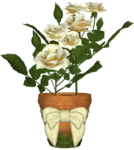 Cream-Roses-Belle-Graphics.png