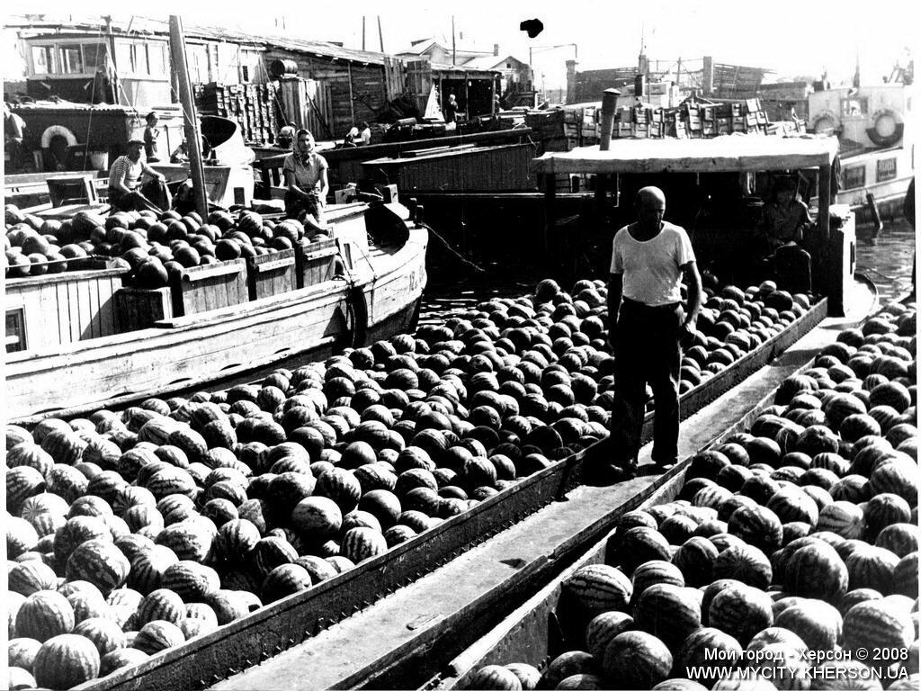 Херсонские арбузы. 1959 год