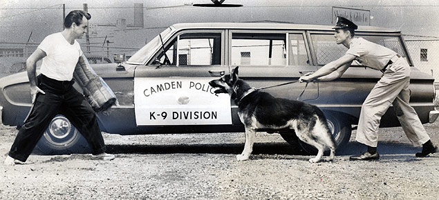 Police dog Apache of Camden, New Jersey, gets his workout with trainer George Mahoney and his patrolman, Dave Newberry