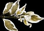 feli_l_foliage6.png