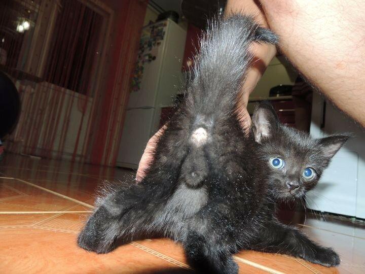 котенок 1 месяц пол фото