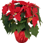 Holliewood_Xmas_Flower5.png