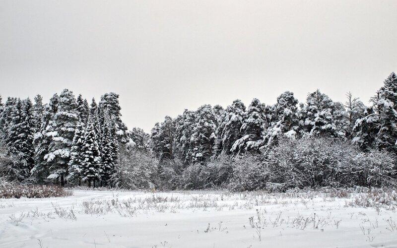 Лыжи и лес в Заречном