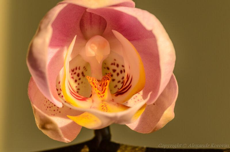 Начало цветения