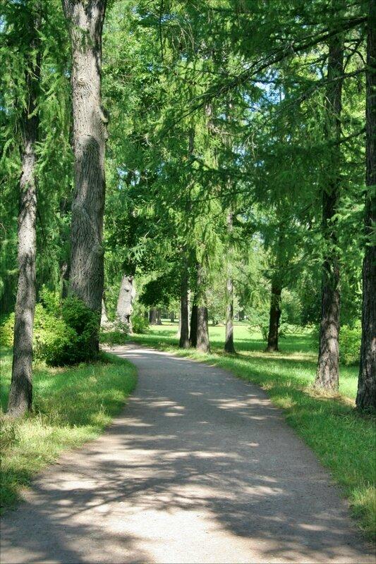 Екатерининский парк, аллея в парке