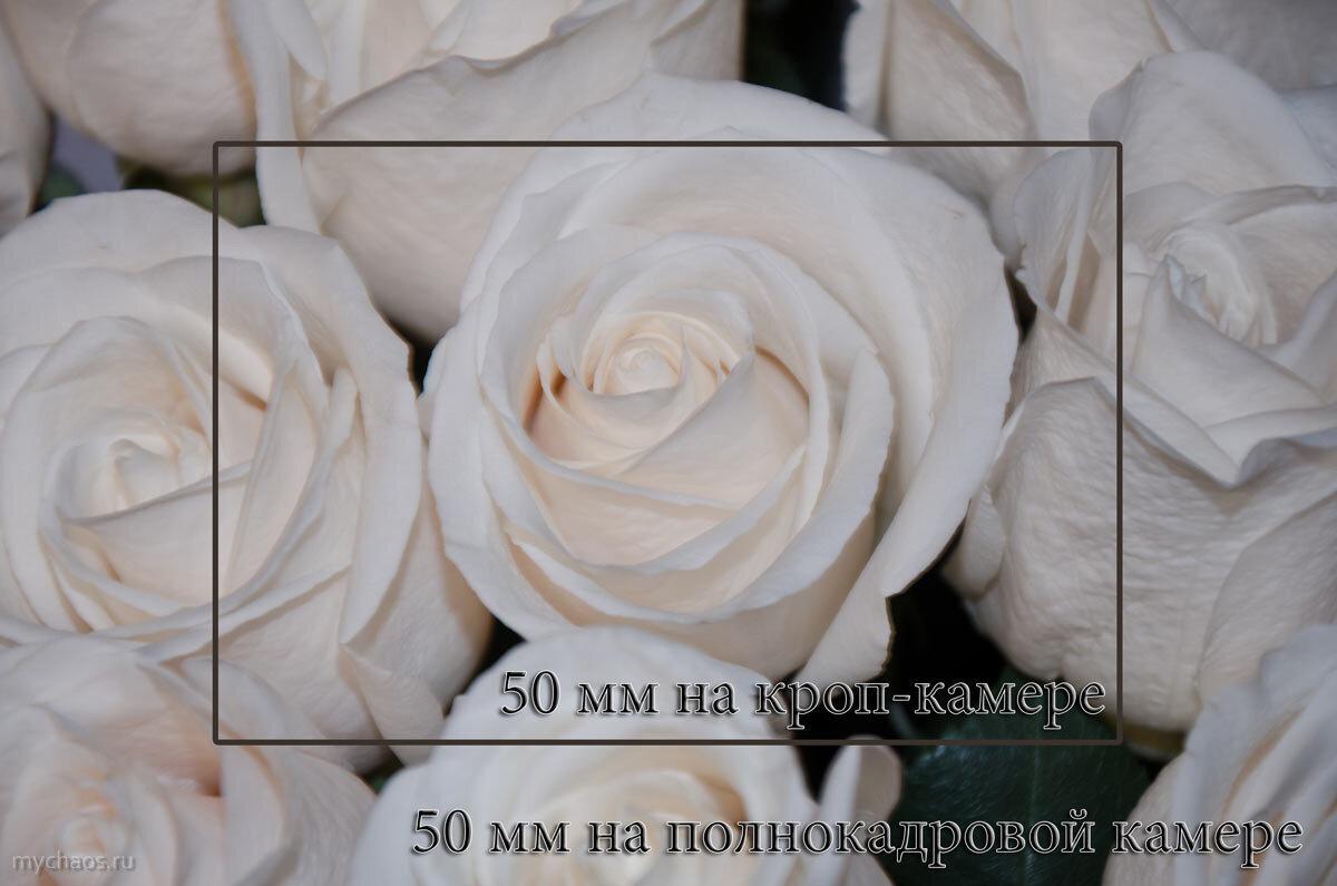 Обзор объектива Nikon 50mm f/1.4D AF Nikkor