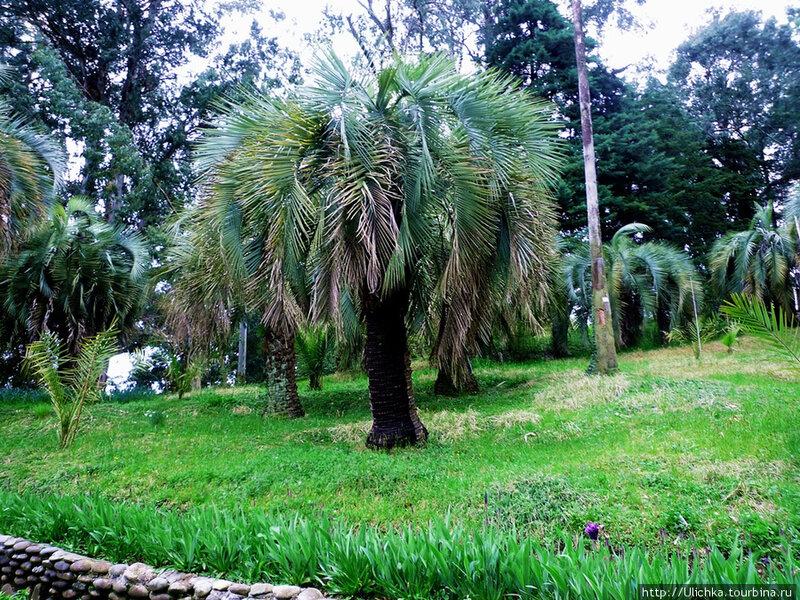 Батумский ботанический сад,