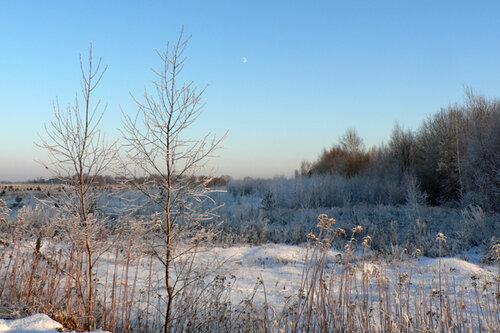 зимняя прогулка берёзки