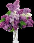 Коллекция клипарта «Весенние цветы» — 3 часть