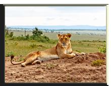 Кения. Масаи. Мара. Фото SkyNex - Depositphotos