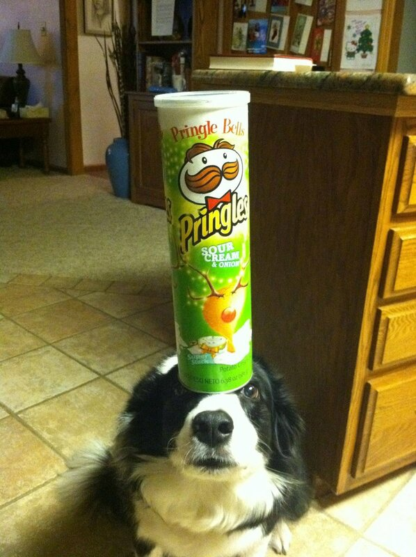 Собака-на-голове-держака