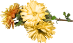feli_gs_flowers.png