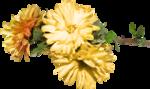 feli_gs_flowers.png