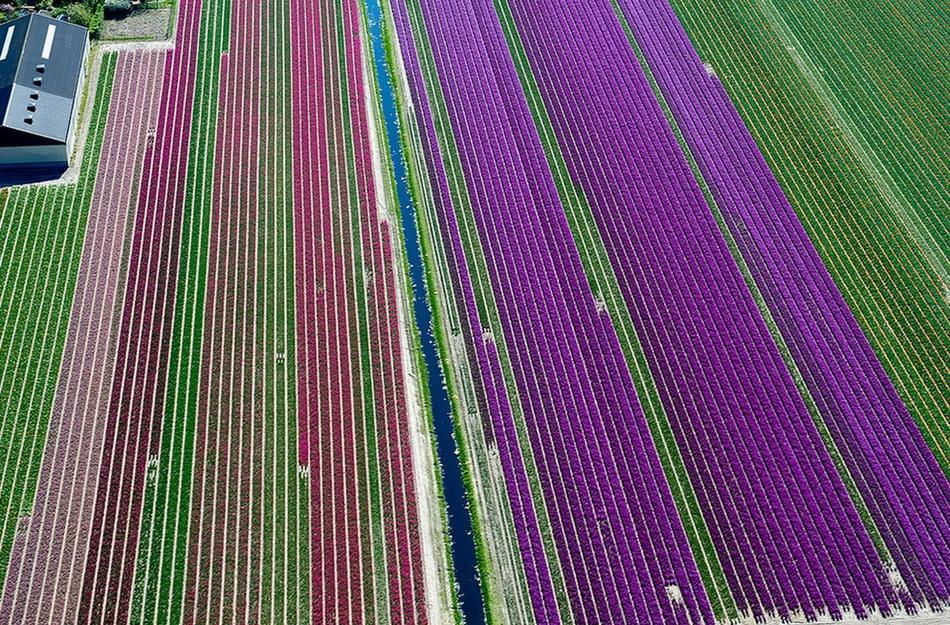 Над полями тюльпанов. 0_bcec3_24c97ba8_orig