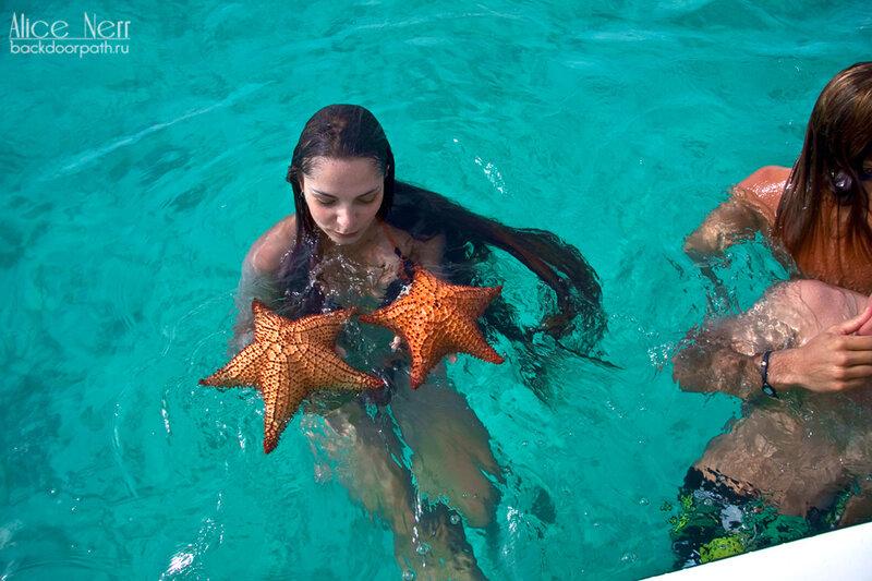 ныряем за морскими звездами по пути с острова crasqui на остров el gran roque