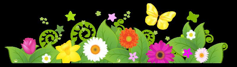 plante-bande de fleurs - .