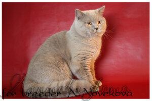 http://img-fotki.yandex.ru/get/4134/162753204.15/0_b8220_ea5b53f6_M.jpg