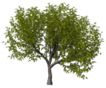 GC_EF_tree_2.png