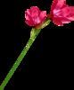 Скрап-набор Crazy Pink 0_b8c36_250e4492_XS