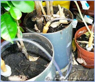 Капельный полив своими руками для цветов в горшках 30
