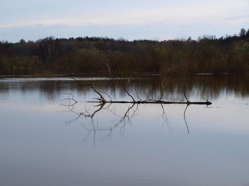 Топляк в озере P4281218
