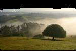 Tube2361_Morning_Fog_misted_09_02_09_sdt.png