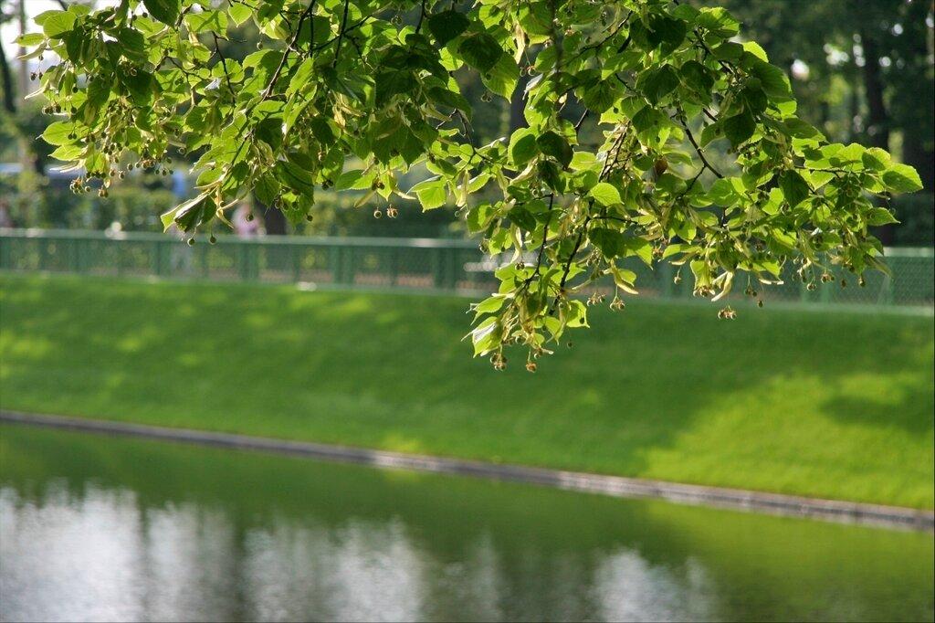Летний сад, Карпиев пруд