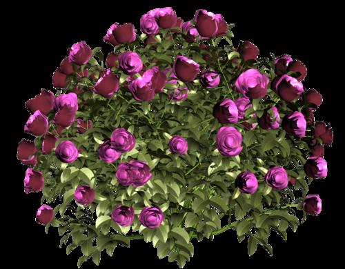 цветочный рай