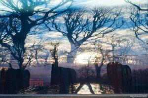 Аноним (дерево, небо, отражение)