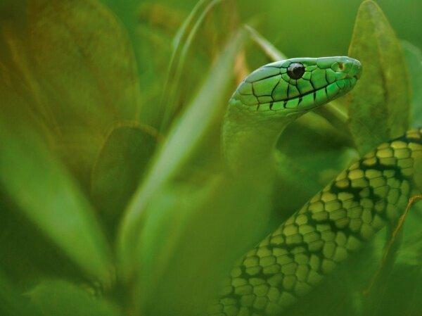 Зеленая смерть